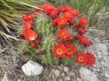 Prettiest cactus I've ever seen.
