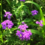 Bunches of purple.